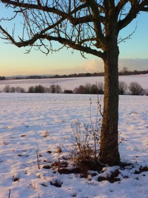 Ein Baum auf schneebedecktem Feld mit weiter Aussicht in der Abendsonne steht für den Jahresrückblick und Ausblick auf 2019.